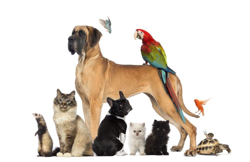 Haustiere helfen für ein gesundes